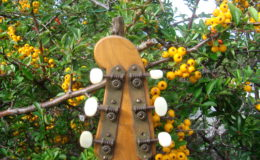 Guitar-6_010