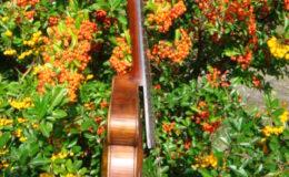 skrzypce -005