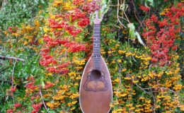 Ligyrofon mandolina (1)