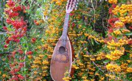 Ligyrofon mandolina (6)