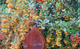 mandolina Volny (9)