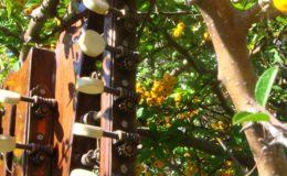 Harp_guitar-1_002
