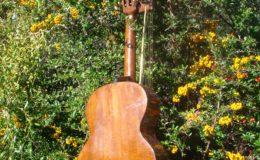 Harp_guitar-1_007
