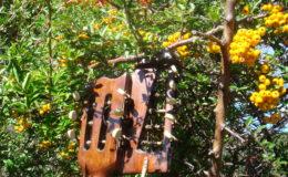 Harp_guitar-1_009
