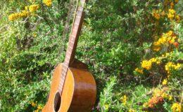 Harp_guitar-1_012