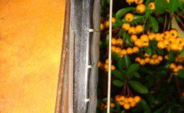 Wappen_Gitara-169_011