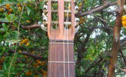 Wappen_Guitar_008