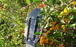 mandolina-1_006