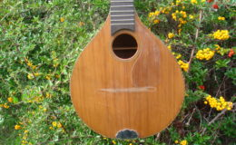 mandolina_nn16_003