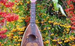 Ligyrofon mandolina (2)