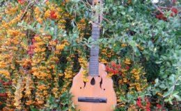 mandolina z elfami (1)
