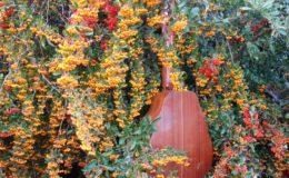 mandolina z elfami (4)