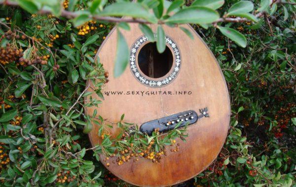 Gitara ala lutnia